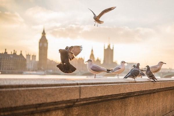 oiseaux bénéficiant de prothèses réalisés en impression 3d